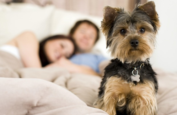 Things to Know Before you Get a Pet